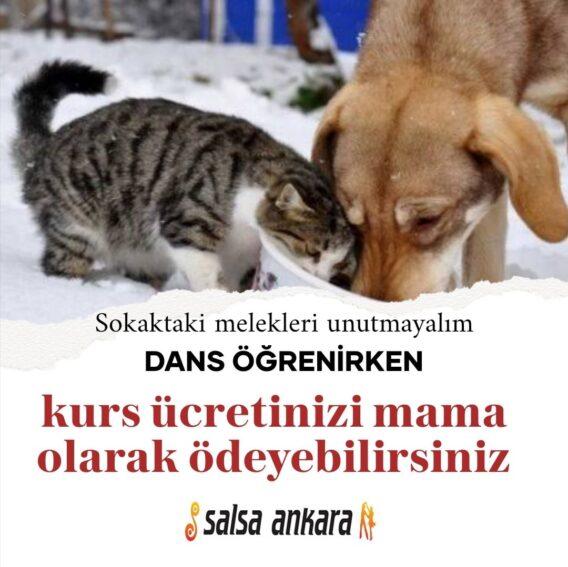 Ankara Tango Kursu ve Kurs Fiyatları